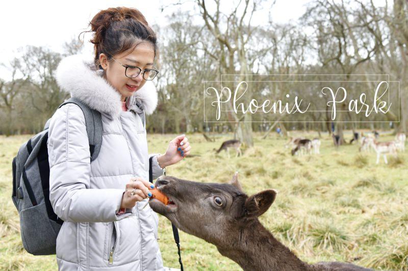 愛爾蘭都柏林|鳳凰公園與小鹿玩耍。超大的Phoenix Park市區公園