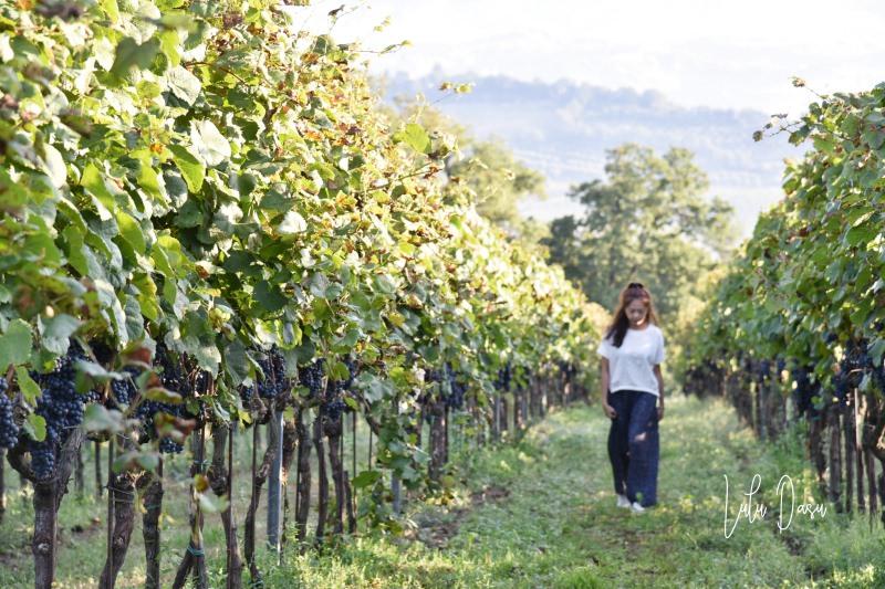 義大利 托斯卡尼超美的葡萄酒莊酒店。Altarocca Wine Resort